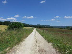 A grassy prarie with a narrow dirt path cut through it