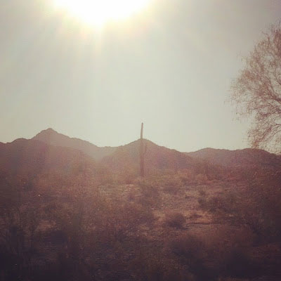 Cactus in the desert by Carolyne Whelan